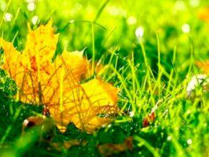 Погода у Кропивницькому 10 жовтня