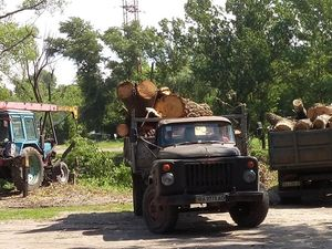 Навіщо вирубують дерева на березі Інгулу?