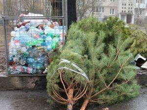 Кропивницький: Міський голова пропонує переробляти ялинки
