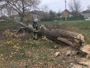 На Кіровоградщині рятувальники два рази розпилювали аварійні дерева