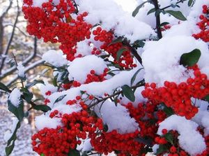 Сьогодні, 14 листопада, у Кропивницькому може випасти перший сніг