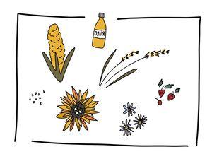 Як українському аграрію освоїти європейський ринок?