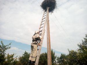 Гайворонський район: Пташеня лелеки випало з гнізда