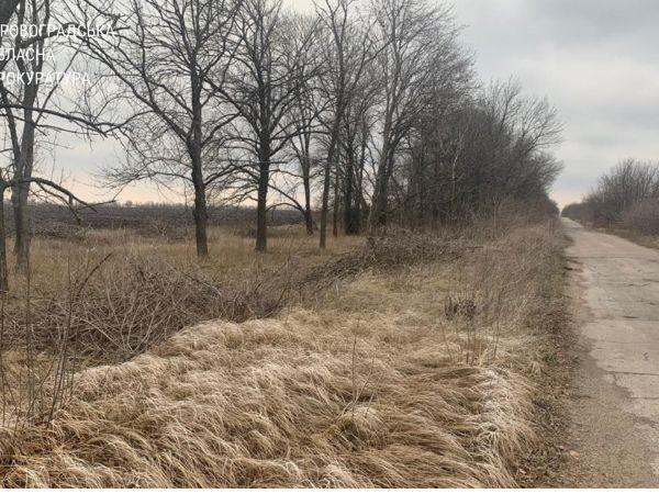 На Кіровоградщині сільського голову притягнули до відповідальності за вирубку дерев