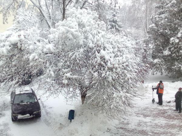 Погода у Кропивницькому 26 лютого