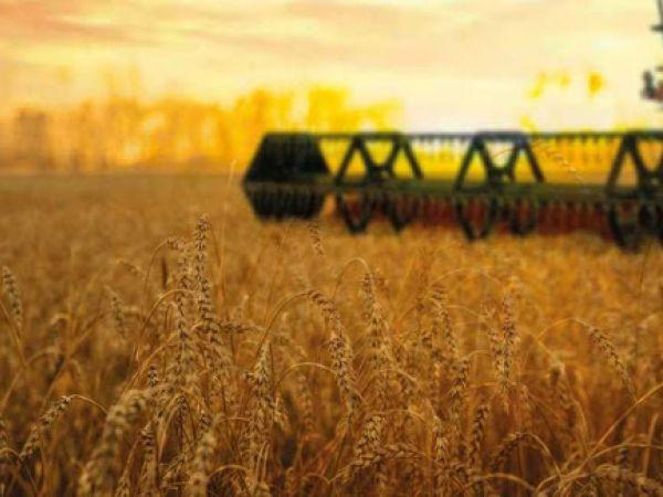 Скільки зерна вже зібрали агарарії на нивах Кіровоградщини?