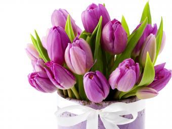Кировоградский Дендропарк распродает тюльпаны!
